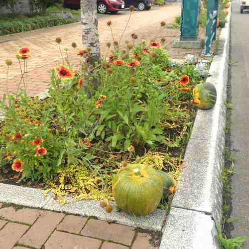 2015-09-19_かぼちゃ収穫祭10_low.jpg